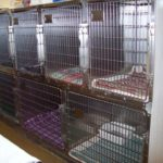 Our front kennels where you pet might spend a hospital stay with us.
